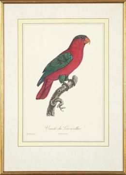 35   -  Lote 35: JACQUES BARRABAND - Aves exóticas